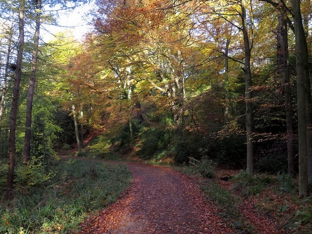 Autumn at Gibside