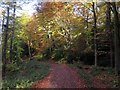 NZ1758 : Autumn at Gibside by Andrew Curtis