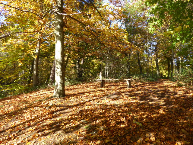 Autumn colours in Bostall Woods