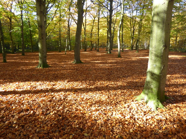 Autumn in Bostall Woods