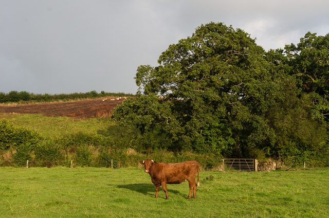 Field by River Ottery