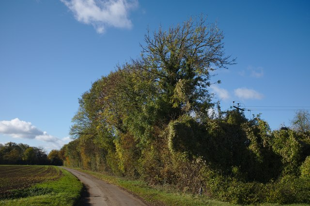 Hedgerow on Thurlby Fen