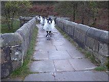 SK1695 : Make way for sheep by Marathon