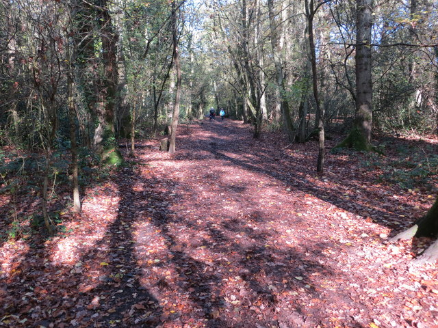 Footpath through Nunnery Wood at Worcester Wood Country Park