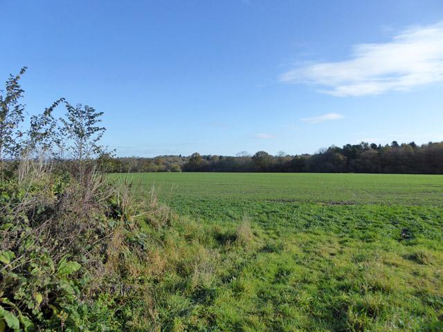 Field east of West End Lane