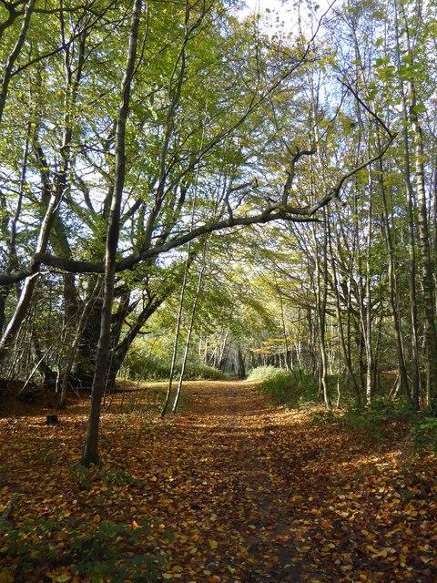 Path downhill towards Great Foxmoor Barns