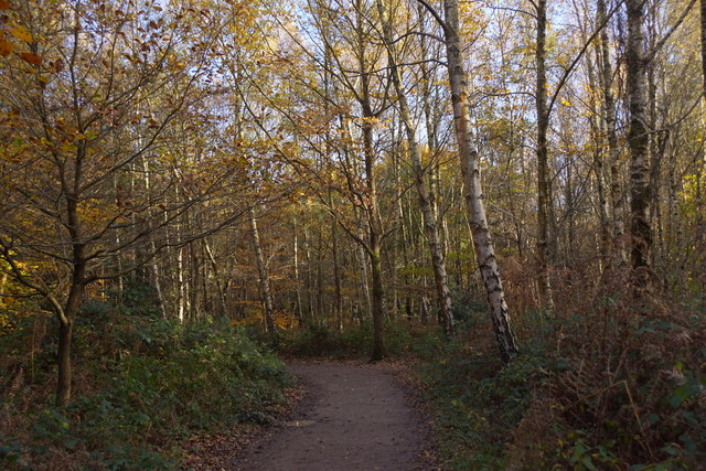 Path in Alice Holt Forest