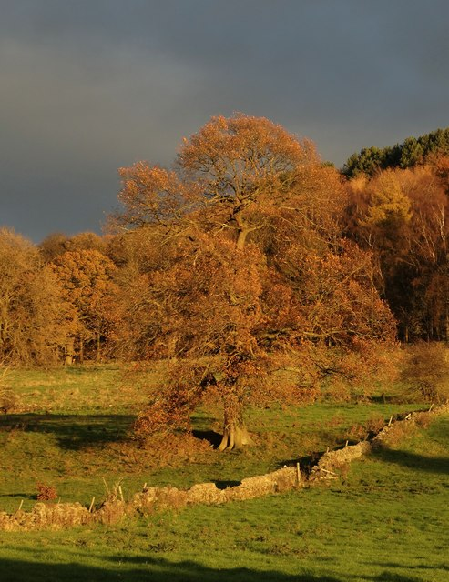 Autumn tree at Rowsley