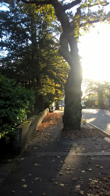 Eversley Park Road, Winchmore Hill, in autumn