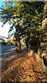 TQ3095 : Eversley Park Road, Winchmore Hill, in autumn by Paul Bryan