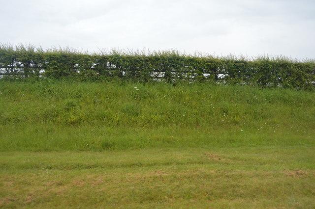 Grass verge, Wembury Rd