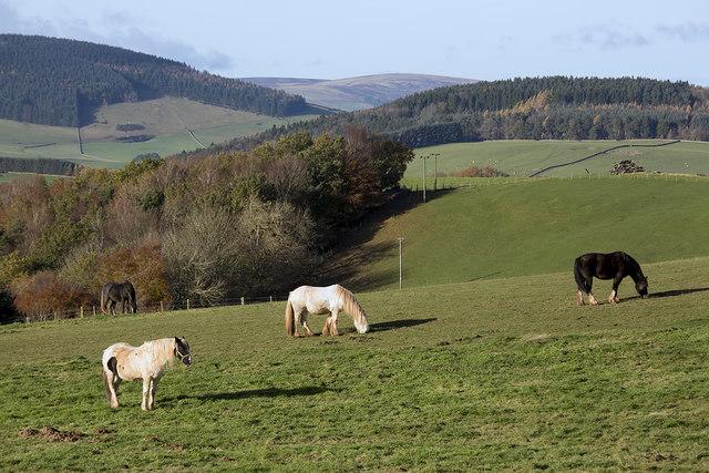 Farmland at Upper Faldonside