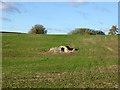 TL1167 : Spring in field near Kimbolton by Robin Webster