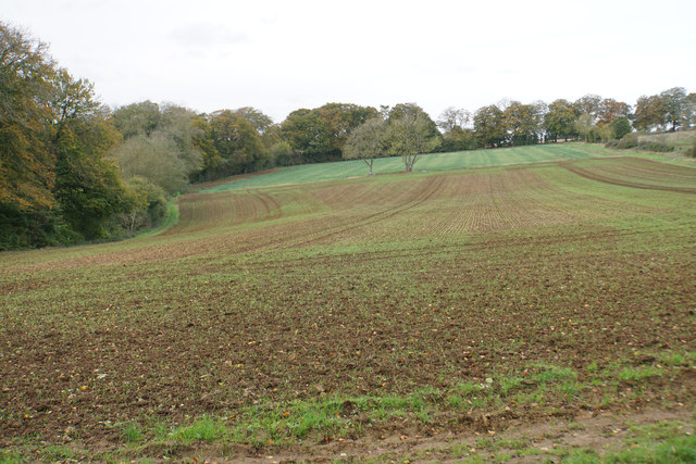 Planted field above Lower Swell