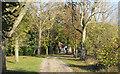 TL6309 : Track to Elm Tree House, Roxwell by Roger Jones