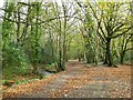 SW6443 : Path in Tehidy Country Park by Philip Halling
