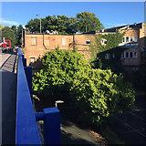 TQ3370 : Evergreen trees below Farquhar Road, Crystal Palace by Robin Stott