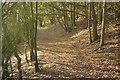 SJ6760 : Eardswick Wood by Stephen McKay