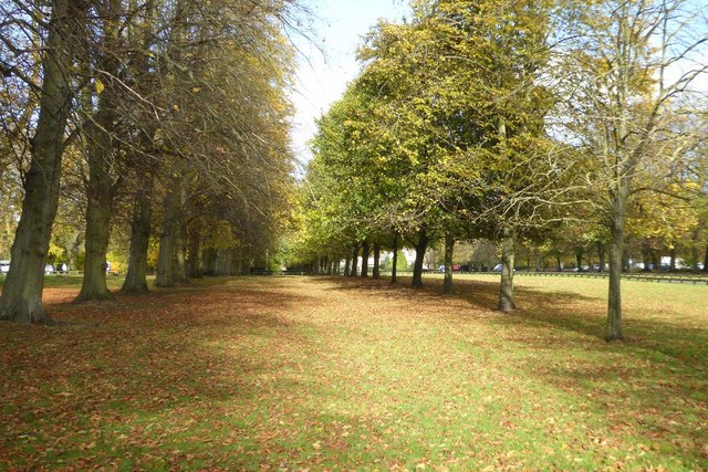 Avenue of trees, Coombe Abbey