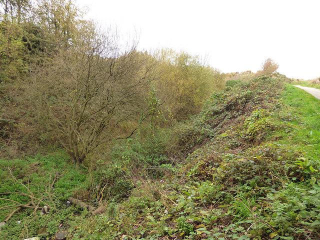 Overgrown railway cutting, Aintree