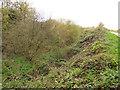SJ3697 : Overgrown railway cutting, Aintree by Stephen Craven