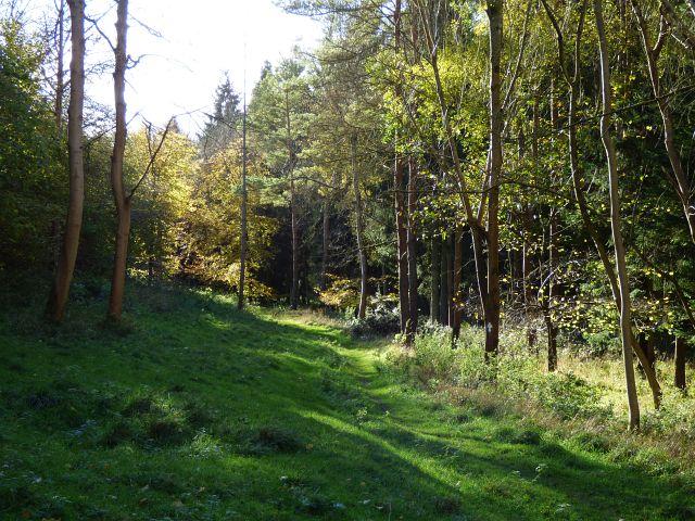 Woodland, Ibstone