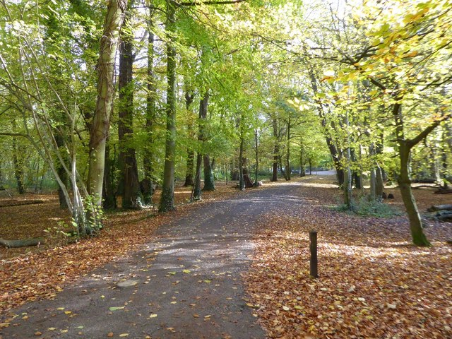 Woodland path in Coombe Country Park