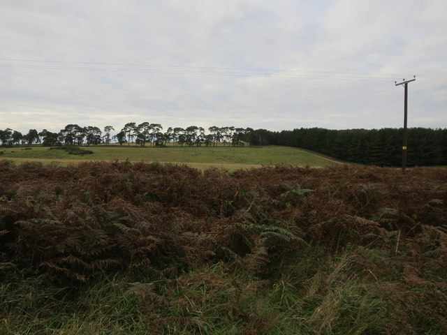 Codson Hill from Mildenhall Woods