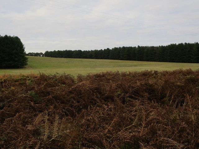 Grassy heath by Mildenhall Woods