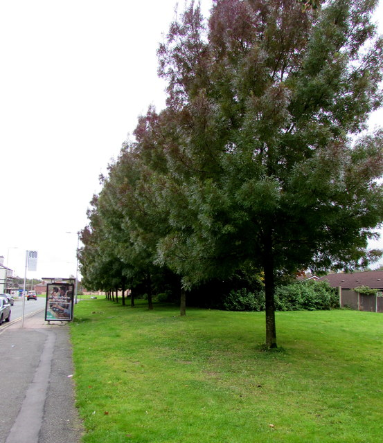 Tree-lined Warrington Road, Ince