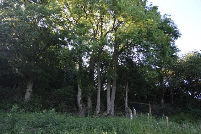 The edge of Wytham Wood