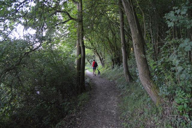 Thames Path thropugh Wytham Woods