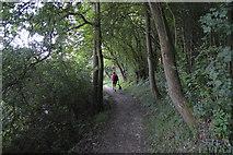 SP4508 : Thames Path thropugh Wytham Woods by N Chadwick