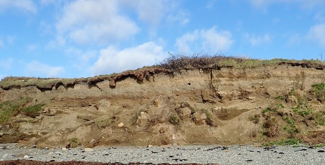 Sand martin nesting holes in the sandy horizons of the  cliffs west of Cooley Point
