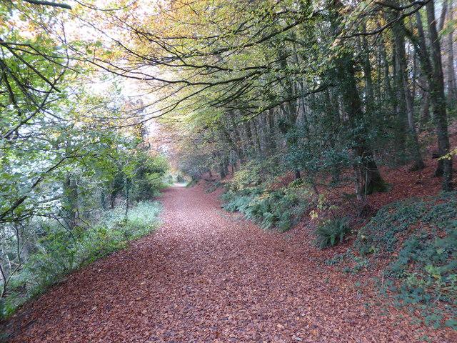 Path through woodland, Langdon Hill