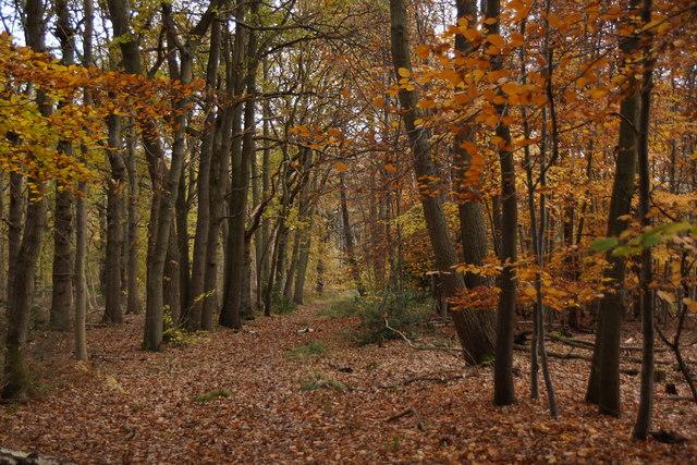 Path through Great Oaks, Oxshott
