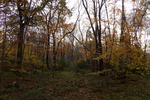 Woodland at Great Oaks, Oxshott
