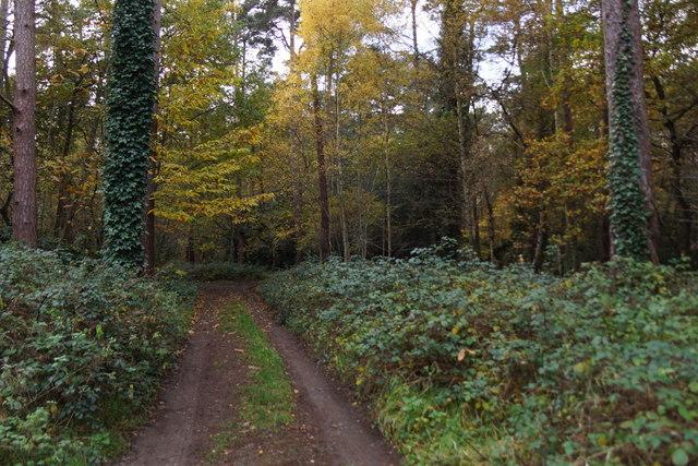 Track on Oxshott Heath