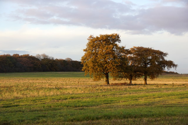 Autumnal trees in a field north of Ashtead Common