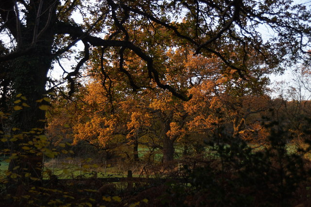 Trees on Ashtead Common