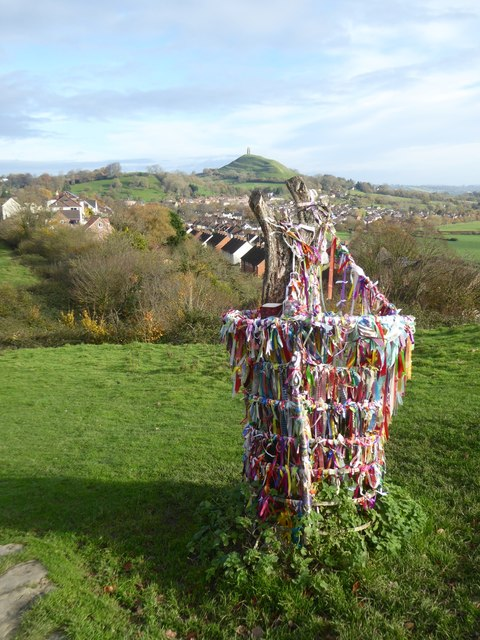 The Glastonbury Thorn, decorated with ribbons