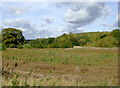 SJ9621 : River Sow flood plain south-west of Great Haywood, Staffordshire by Roger  Kidd