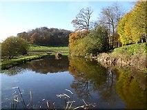 ST7733 : Garden Lake, Stourhead Gardens by Philip Halling