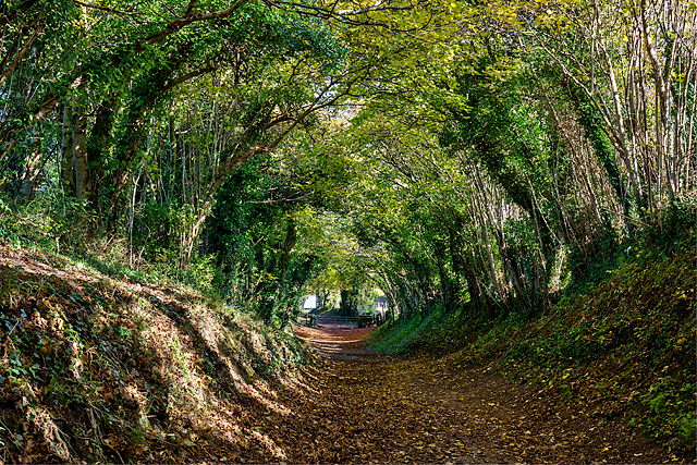 Mill Lane, Halnaker (2)