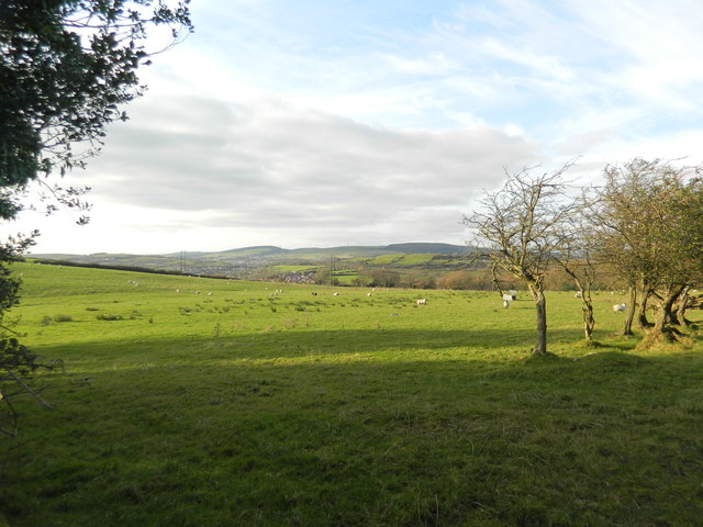 Sheep grazing near Coedely