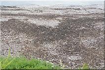 SX5048 : Beach sediment by N Chadwick