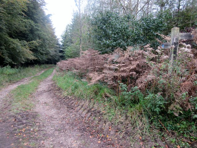 Bridleway to Boxgrove