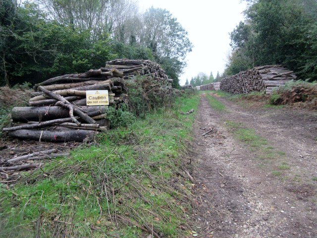 Wood stacked by bridleway