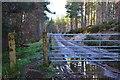 NH9021 : Forest gate into Ellan Wood by Jim Barton