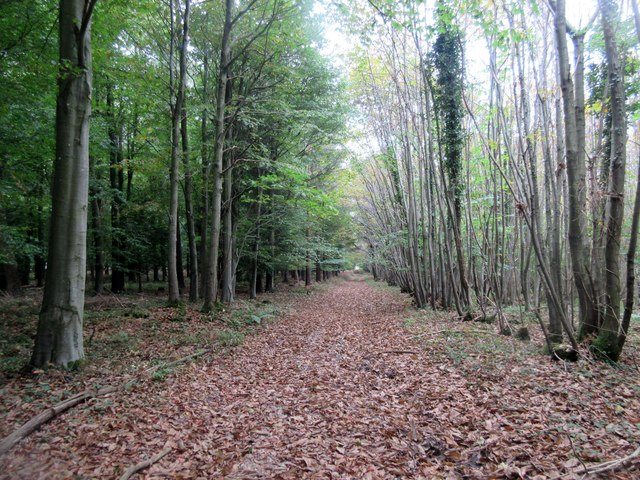 Path between trees, Red Copse